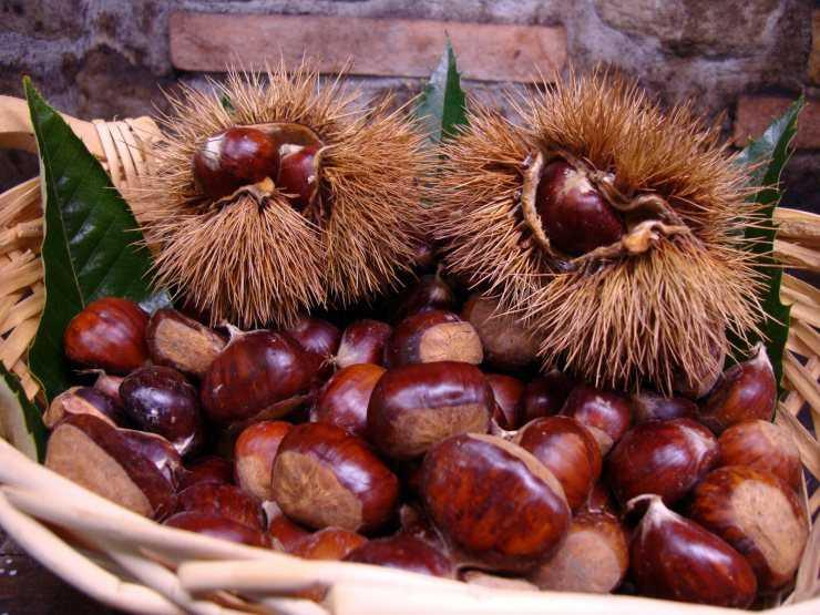 Орех макадамия – польза и вред, почему сладкий на вкус, как чистить, хранить