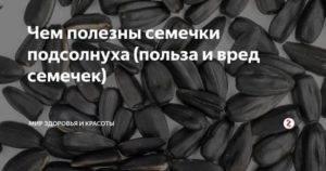 """""""семечки подсолнуха: свойства и калорийность, польза и противопоказания"""""""