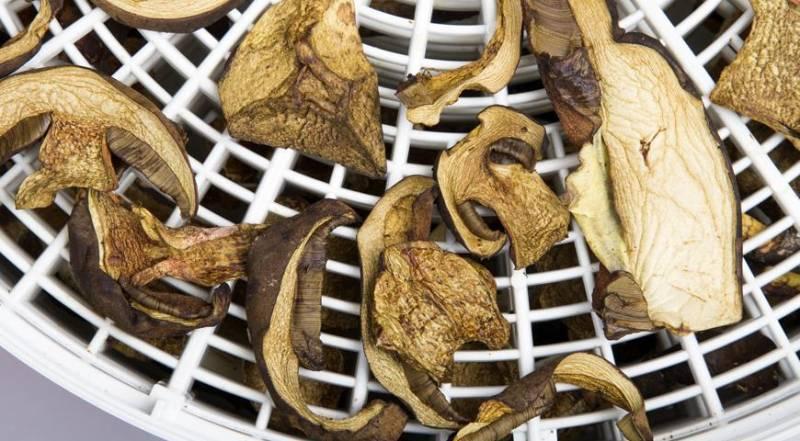 Сушеные грибы: как правильно сушить и хранить грибы