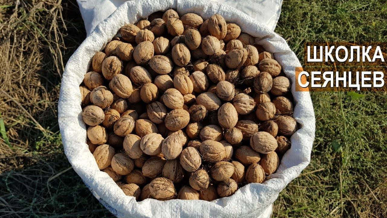 Ореховый бизнес, или как орешки стали для меня «золотыми». реальный опыт украинской семьи