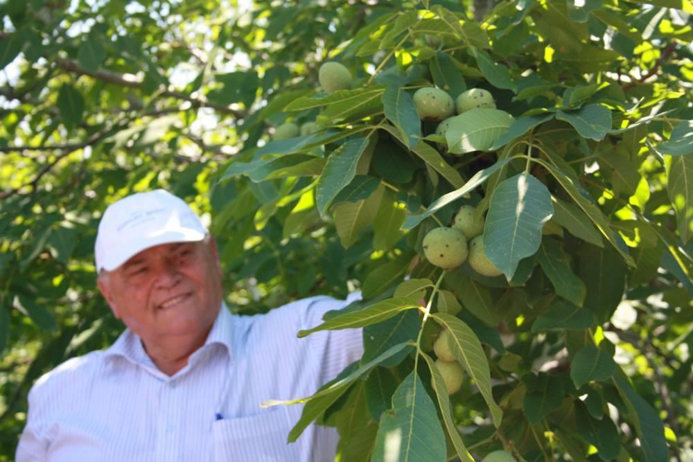Как вырастить грецкий орех на даче: секреты, о которых не говорят всем