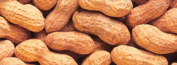 Арахис при похудении: можно ли есть, поправляются ли от арахиса