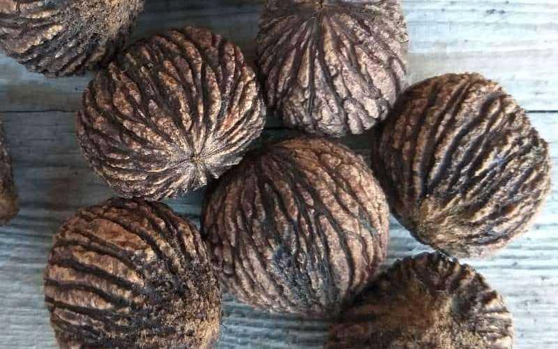 Настойка черного ореха – инструкция по применению
