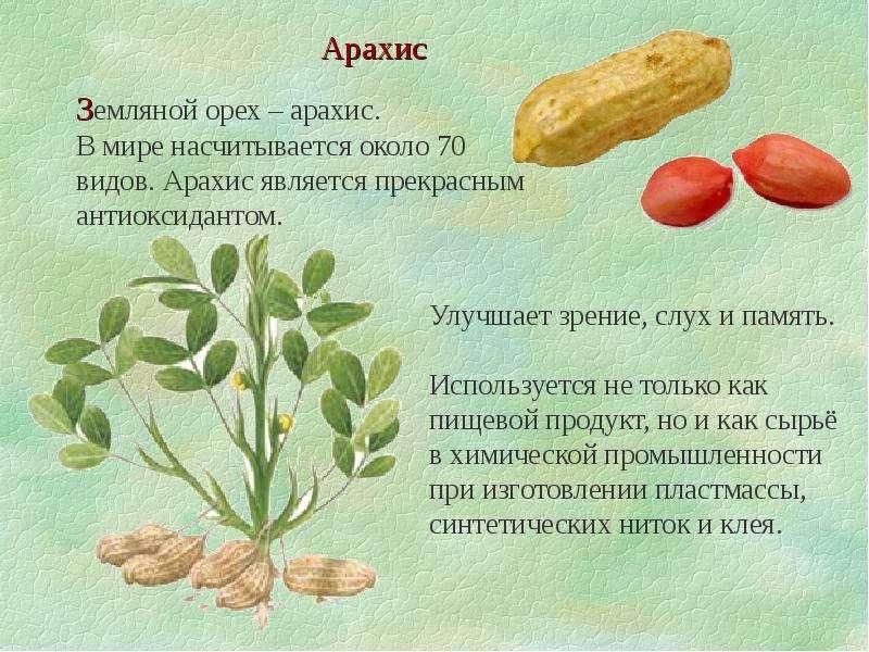 Арахис. в чем состоит польза и вред для организма человека?