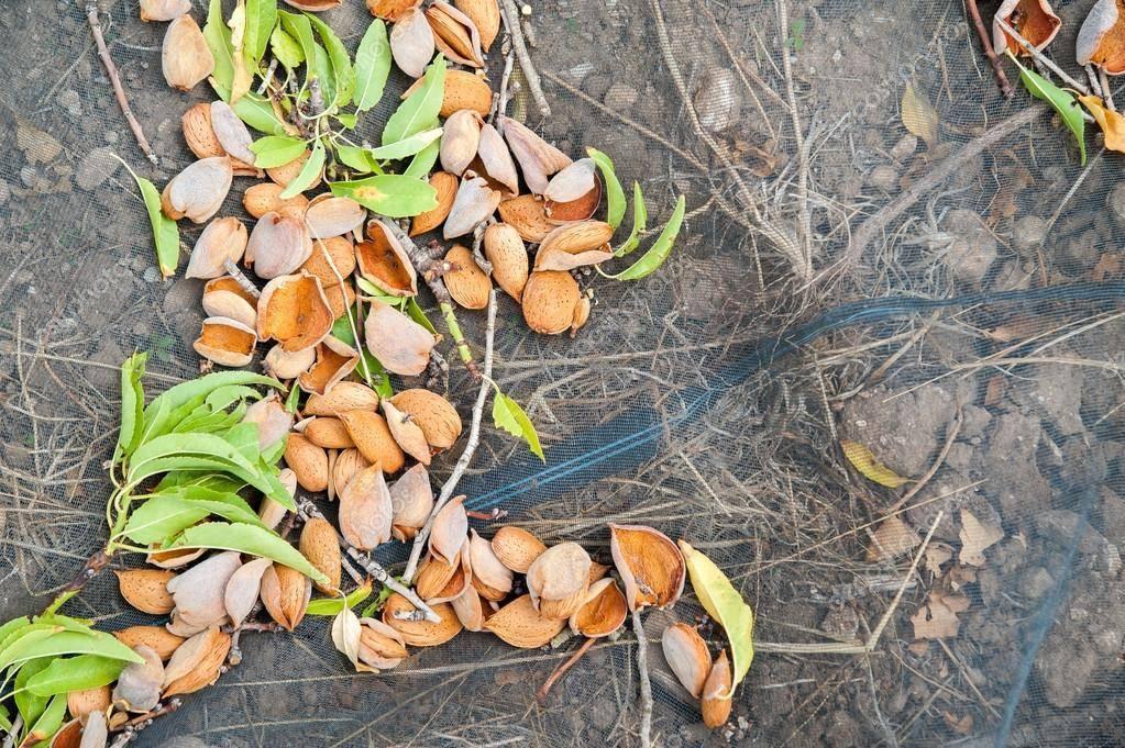 Обрезка плодовых деревьев: как и когда это необходимо делать?