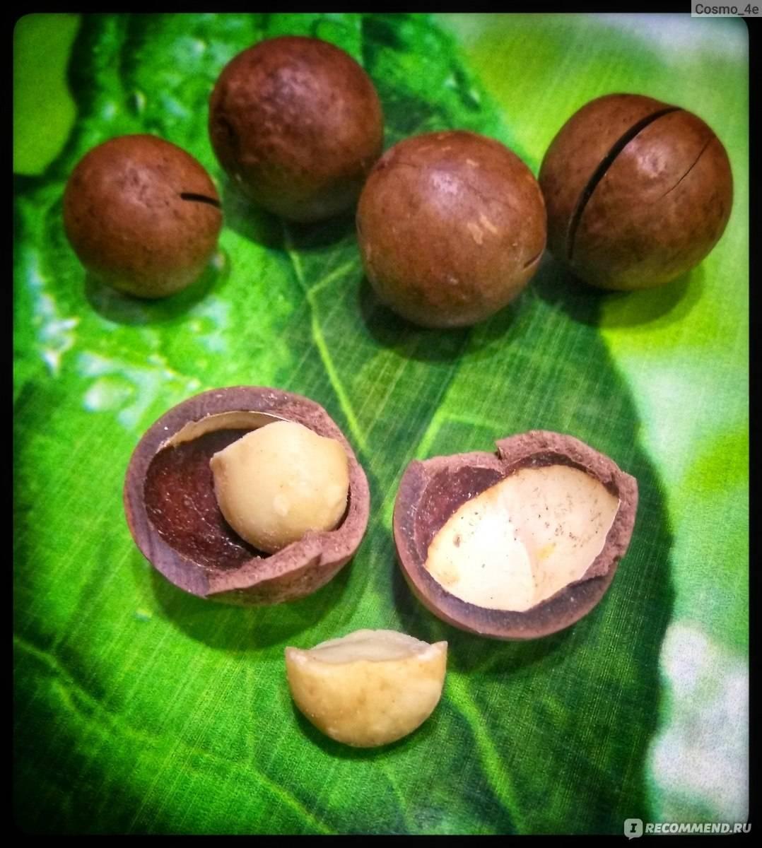 Как расколоть орехи макадамия: 10 шагов
