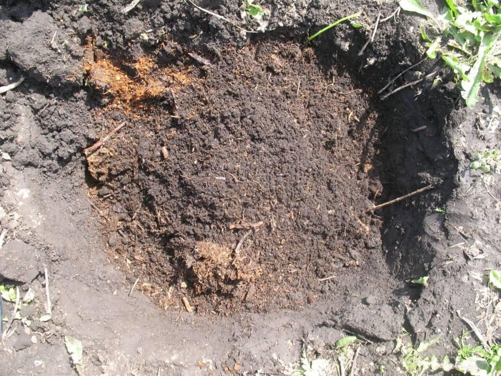 Фундук: выращивание и уход в средней полосе россии, лучшие сорта, размножение