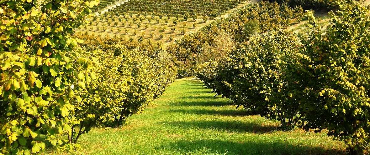 Биозащита садов - союз органического земледелия