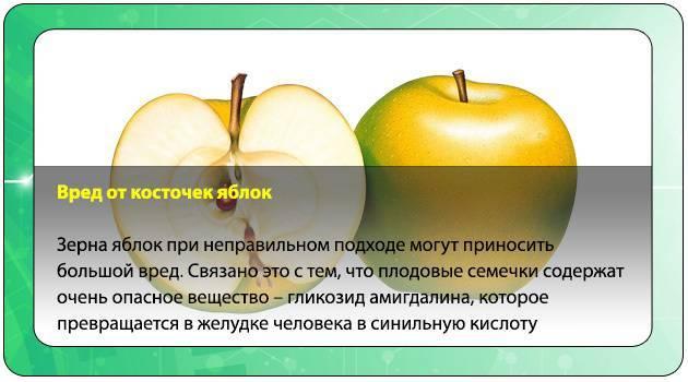 Вредно или полезно есть семечки от яблок