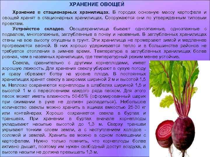 § 3. хранение основных видов овощей [1969 наместников а.ф. - хранение и переработка овощей, плодов и ягод]