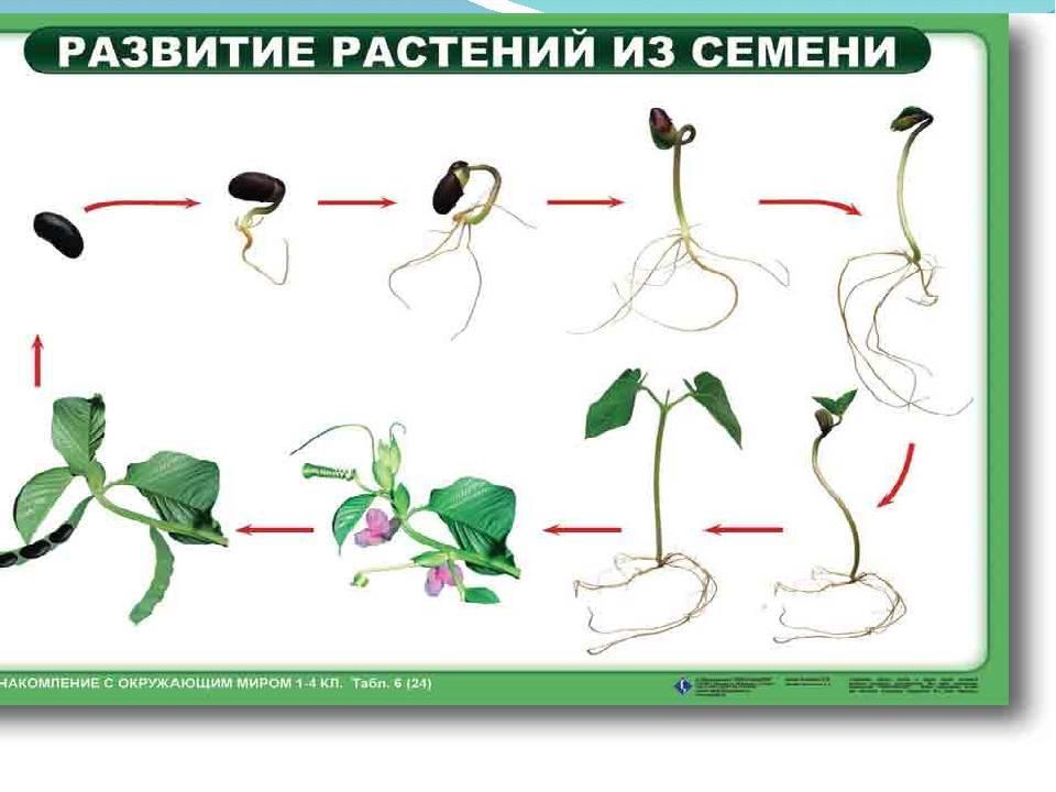 Евгений брониславович квач, белорусский корифей и знаток фундука — портал ореховод