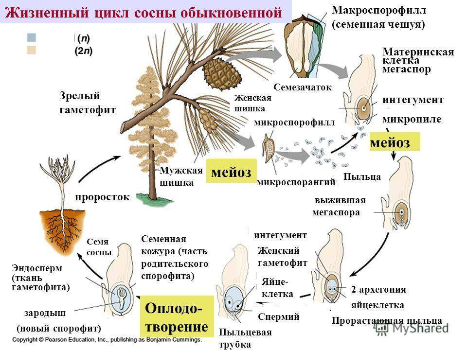 Евгений брониславович квач, белорусский корифей и знаток фундука