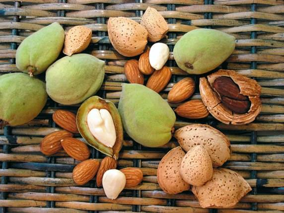 Какой орех полезнее фундук или миндаль | польза и вред
