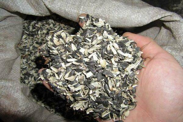 Шелуха от семечек как удобрение, как применять, советы