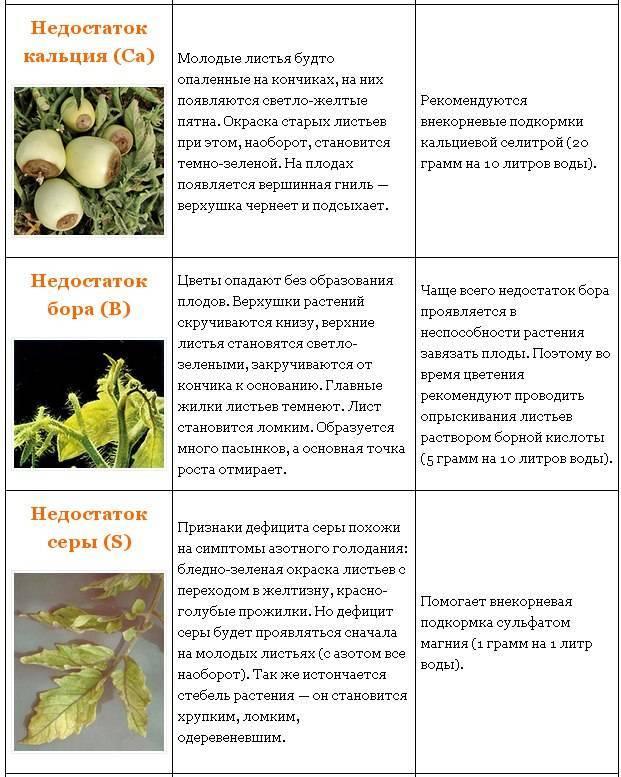 Виноград виктория: описание сорта, отзывы, фото урожая, посадка, выращивание и уход, опылители, урожайность, морозоустойчивость