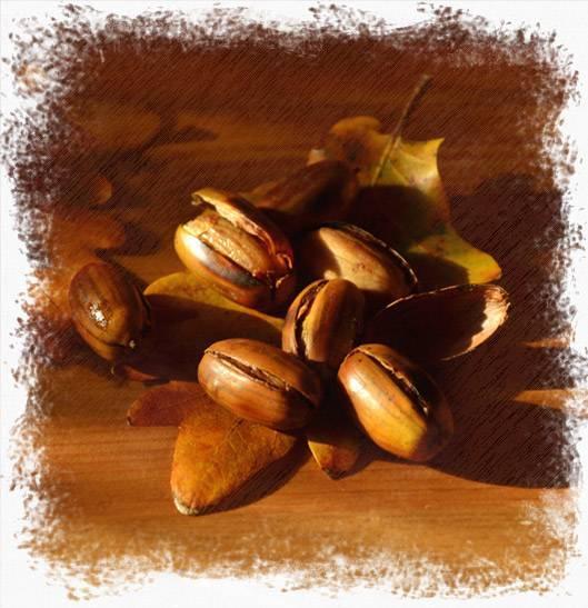 Кофе из желудей - особенности приготовления и польза напитка
