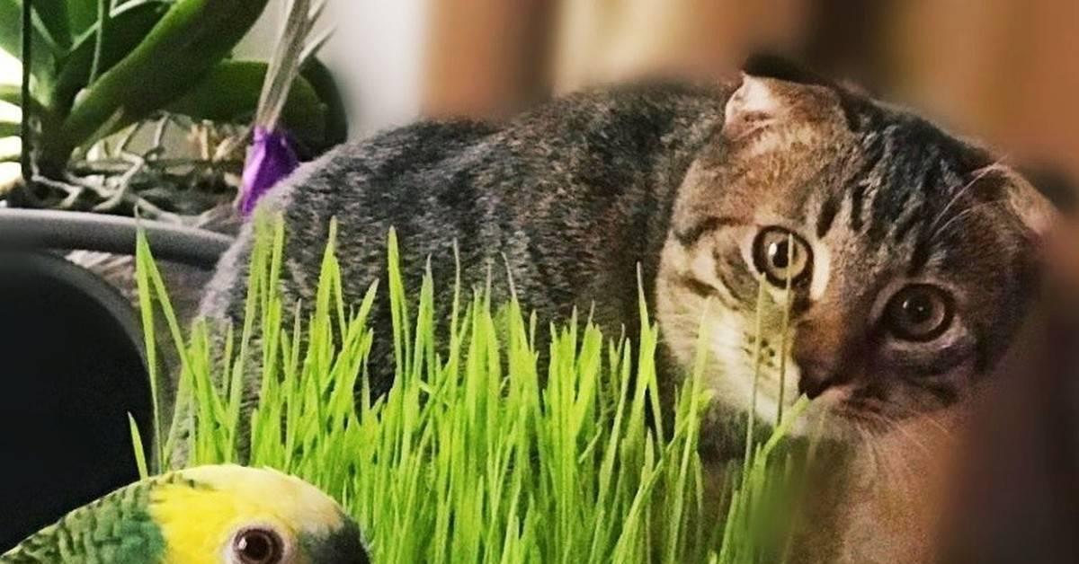 Какую траву можно давать собакам?