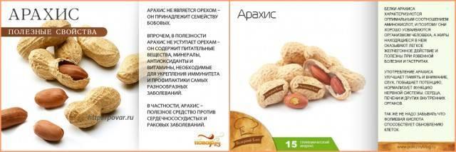 Кола орех - полезные и опасные свойства орехов кола