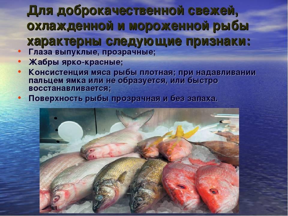 Холодильная обработка рыбы и морепродуктов