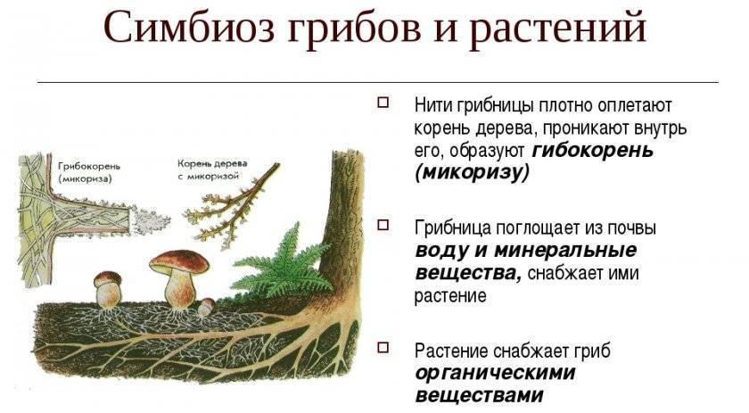 Выращивание культур с микоризой - агроэкомиссия - цифровая платформа знаний