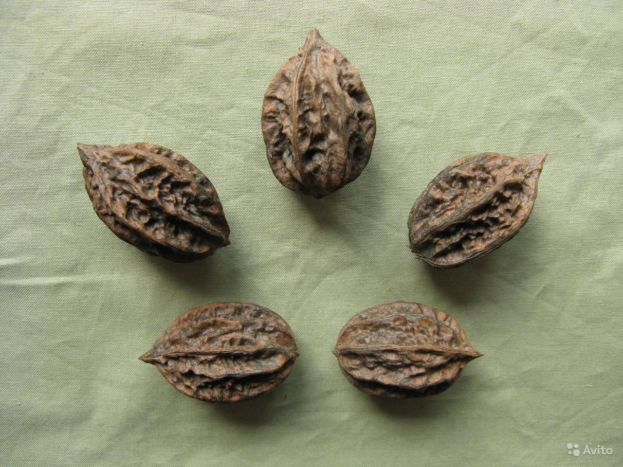 Маньчжурский орех и его выращивание