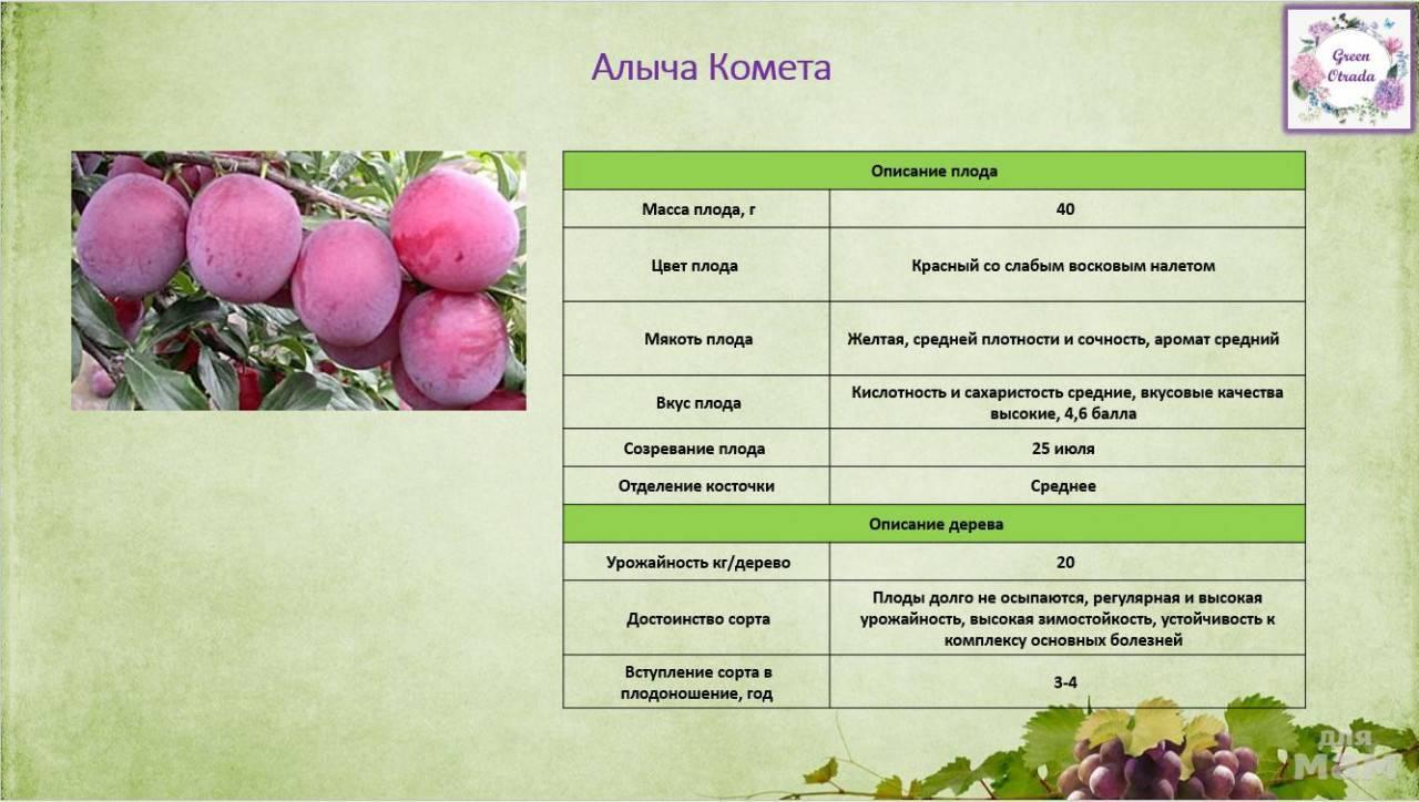 Миндаль декоративный. условия выращивания и уход в средней полосе