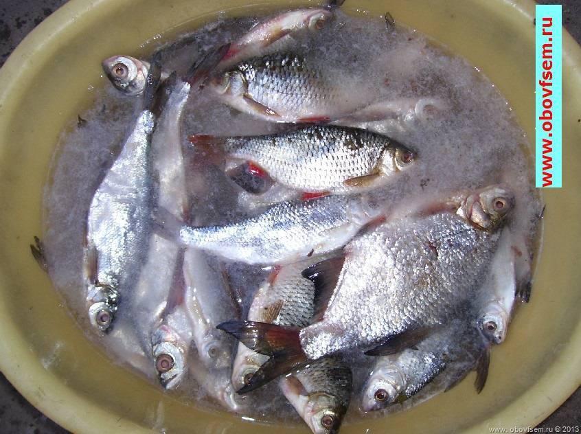 Как солить красную рыбу в домашних условиях вкусно и просто - 8 рецептов пошагово