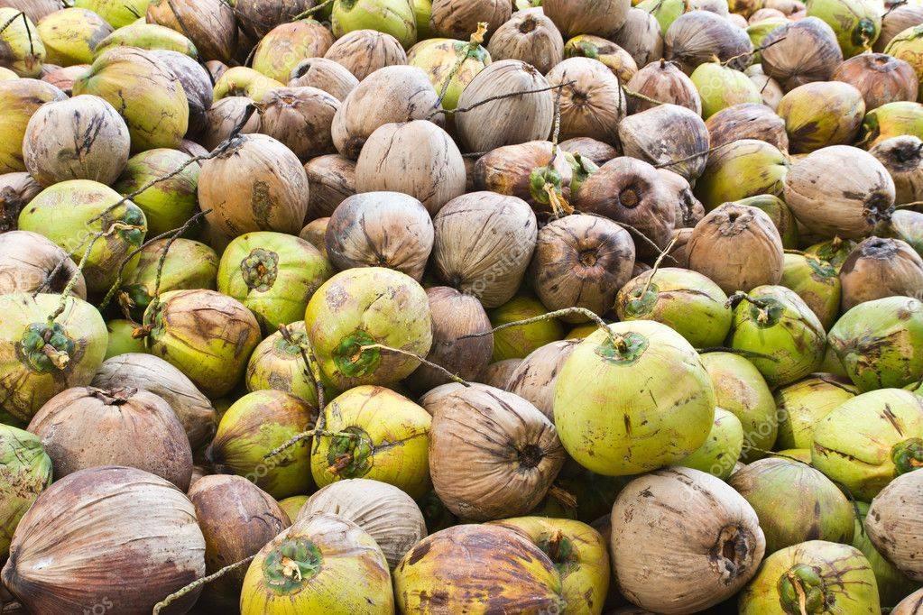 Зеленый и коричневый кокос: в чем разница? интересные факты о кокосах | восстановление детей. аутизм. дцп. эпилепсия. блог о тенториум