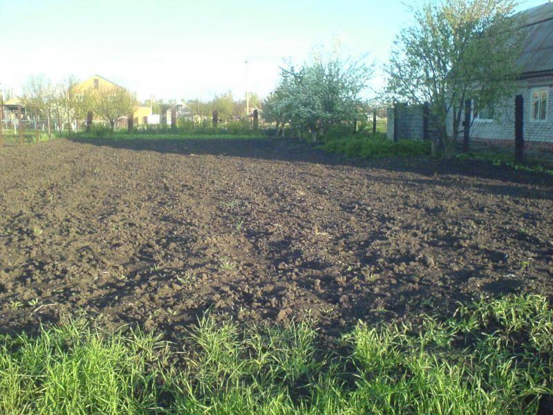 Как купить землю под сад в украине как купить землю под сад в украине
