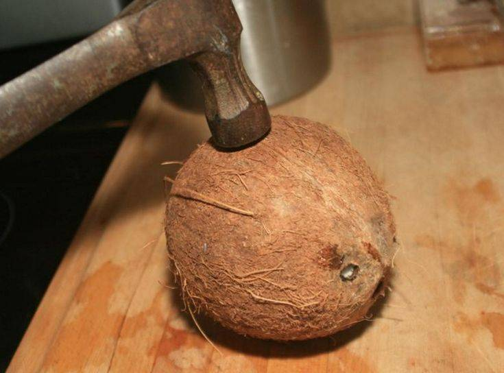 Как правильно открыть кокос в домашних условиях: быстрый способ, видео