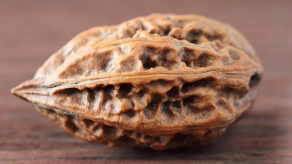 Орех маньчжурский, лечебные свойства и противопоказания