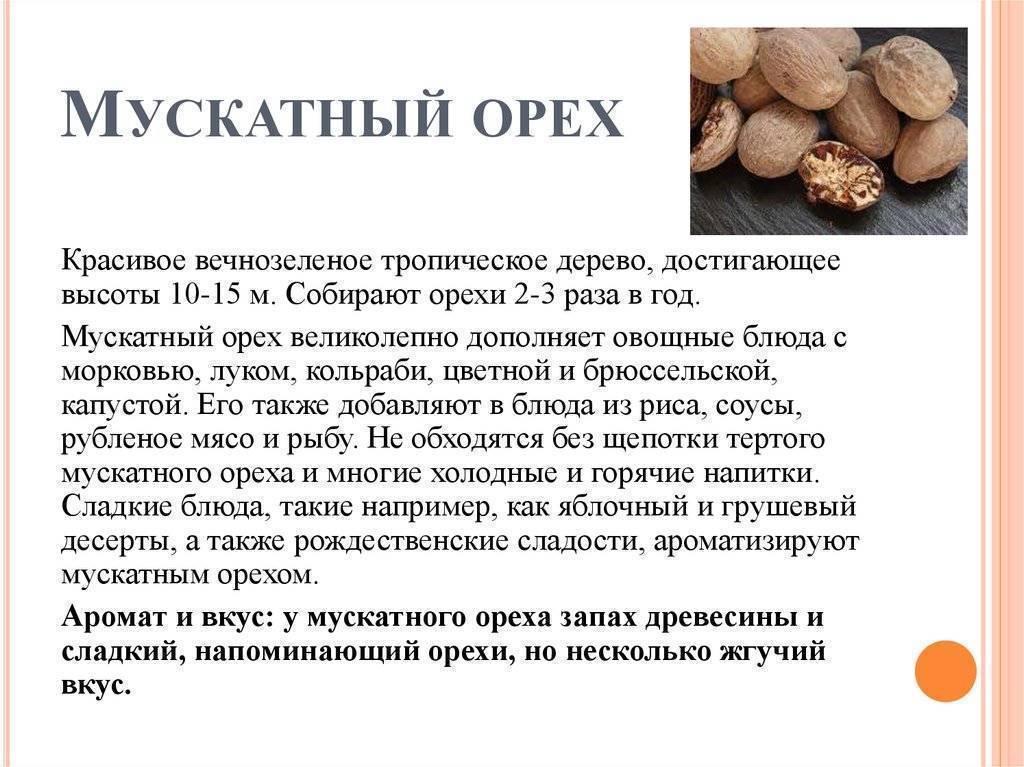 О полезных и опасных свойствах мускатного ореха: кулинарное использование и противопоказания к употреблению