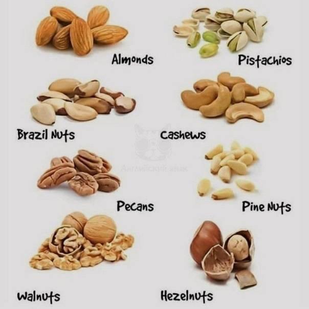 Виды орехов: названия и их изображения