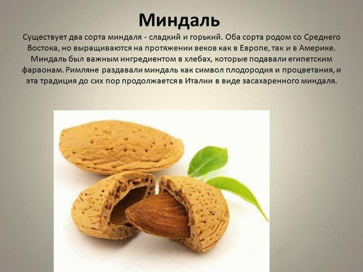 Миндаль: польза и вред, калорийность, полезные и лечебные свойства, противопоказания для мужчин и женщин
