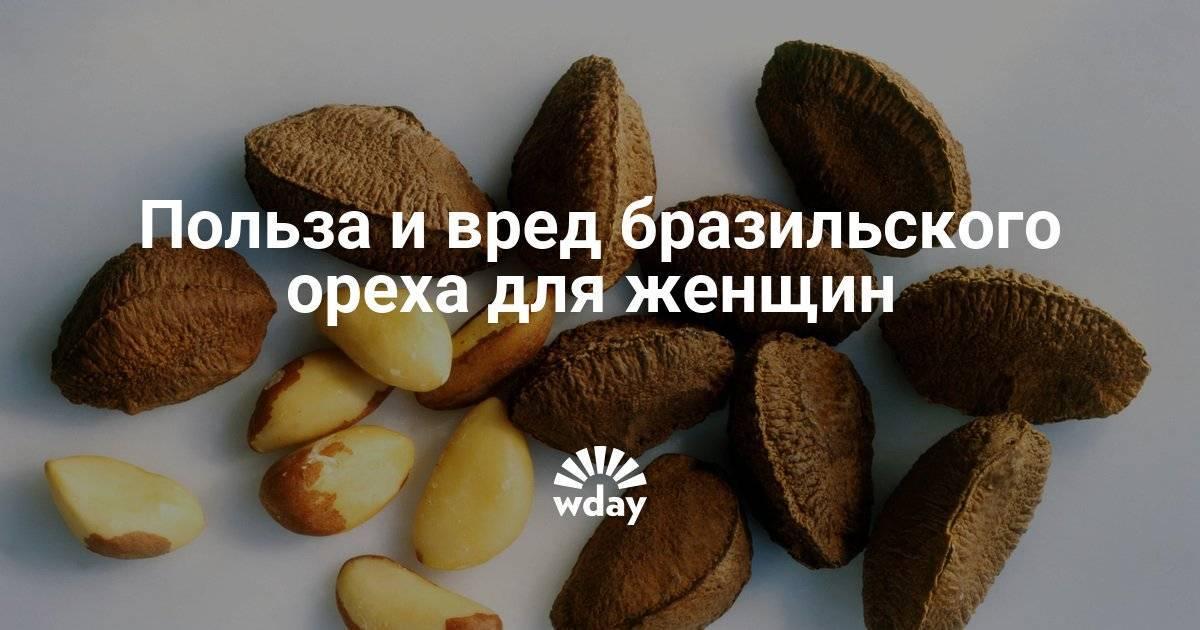 Бразильский орех - польза и вред для женщин. свойства, состав и противопоказания для приема бразильского ореха