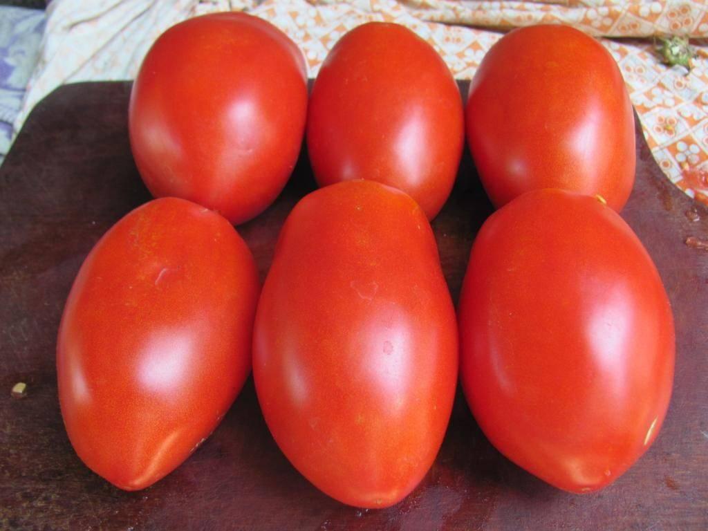 Сорта томатов для краснодарского края с описанием, характеристикой и отзывами, а также особенности выращивания в данном регионе