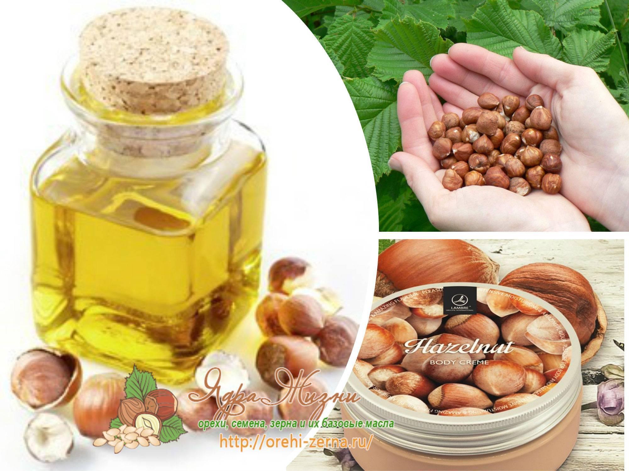 Масло лесного ореха (фундука): состав, свойства. масло лесного ореха в косметологии и кулинарии: рецепты | знать про все