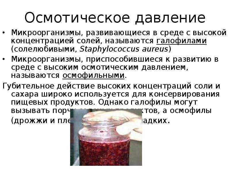 Основные виды микроорганизмов, вызывающих порчу консервированных продуктов