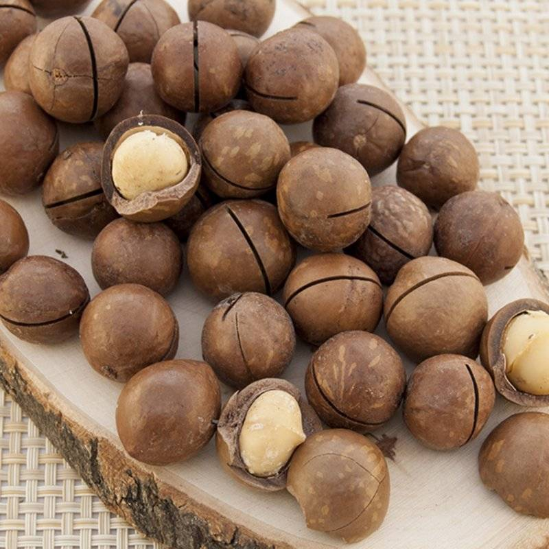 Орех макадамия - состав, рецепты и противопоказания к употреблению (125 фото)