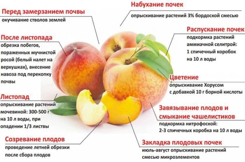 Декоративный миндаль - описание выращивания и ухода