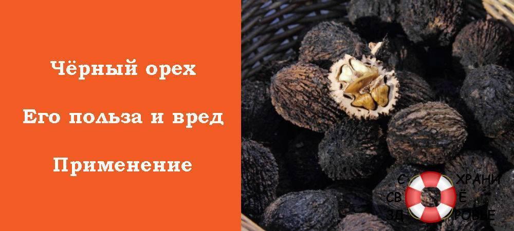 Чем поможет здоровью черный орех и почему это лучшее природное средство от паразитов