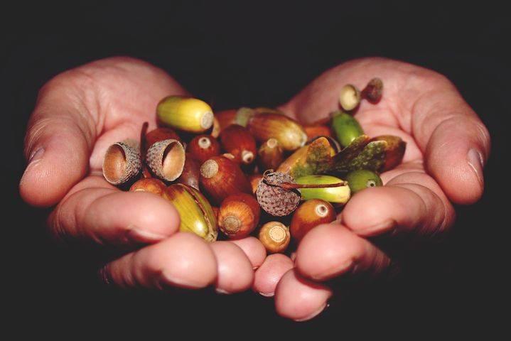 Полезные и лечебные свойства коры дуба