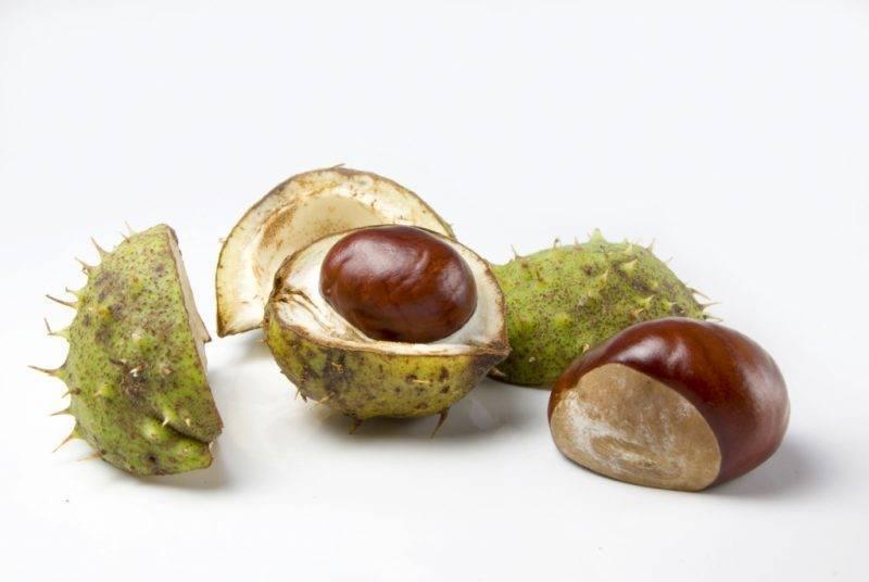 Конский каштан — лечебные свойства и противопоказания, инструкция по применению, видео