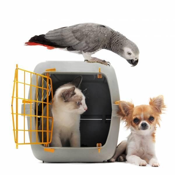 Можно ли собаке семечки подсолнуха или тыквенные, давать ли их от глистов щенкам и взрослым, что делать, если питомец съел очищенные, жареные или с шелухой?
