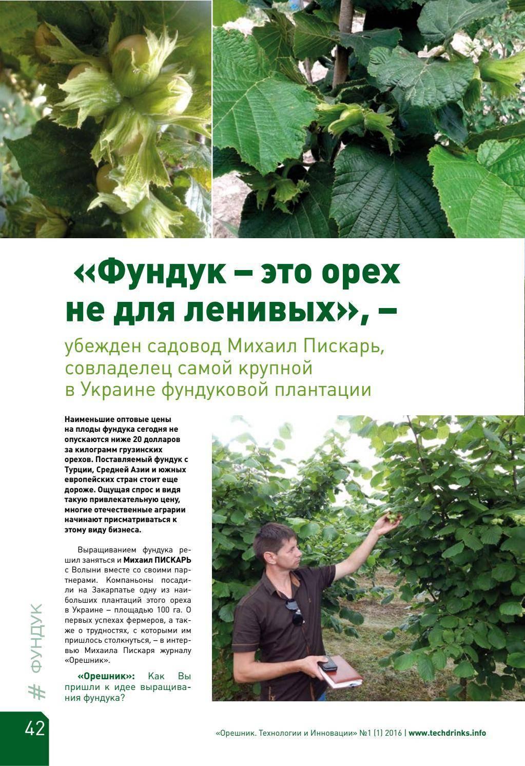 Лещина — лесной орех. выращивание, посадка и уход. размножение. сорта. фото — ботаничка.ru