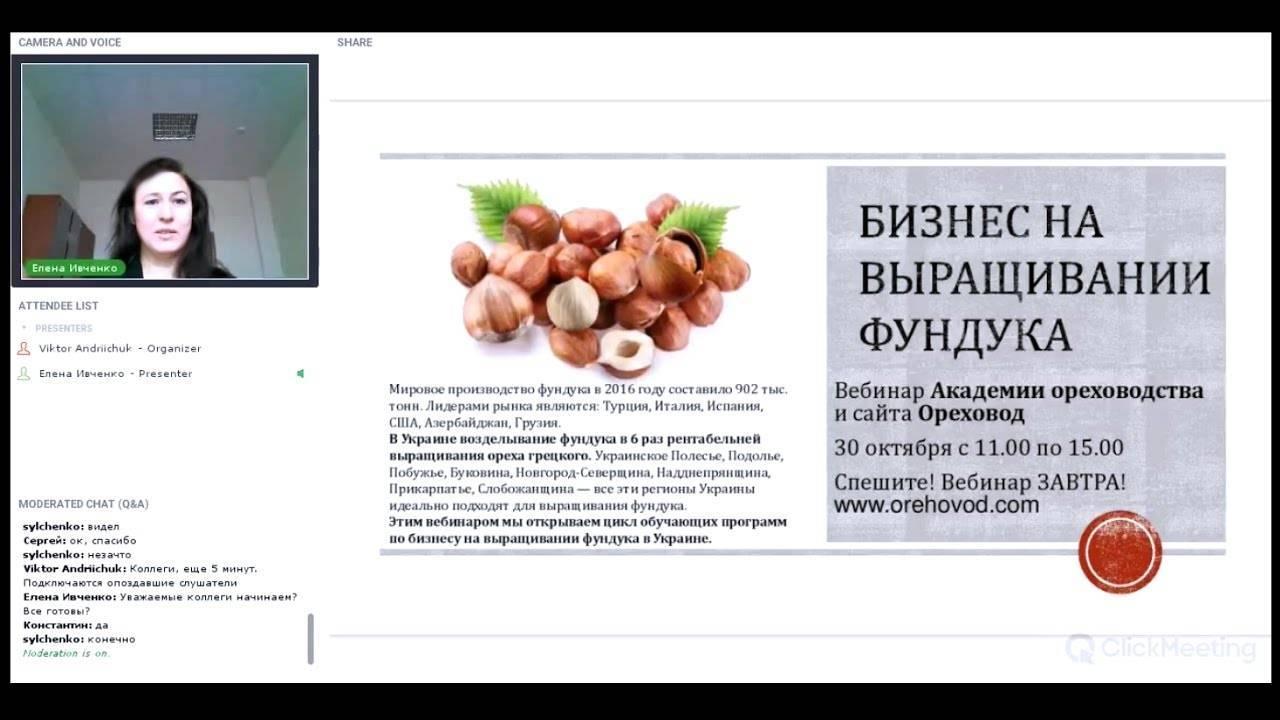 ✅ выращивание фундука, как бизнес, урожайность с одного гектара, промышленное выращивание - tehnoyug.com