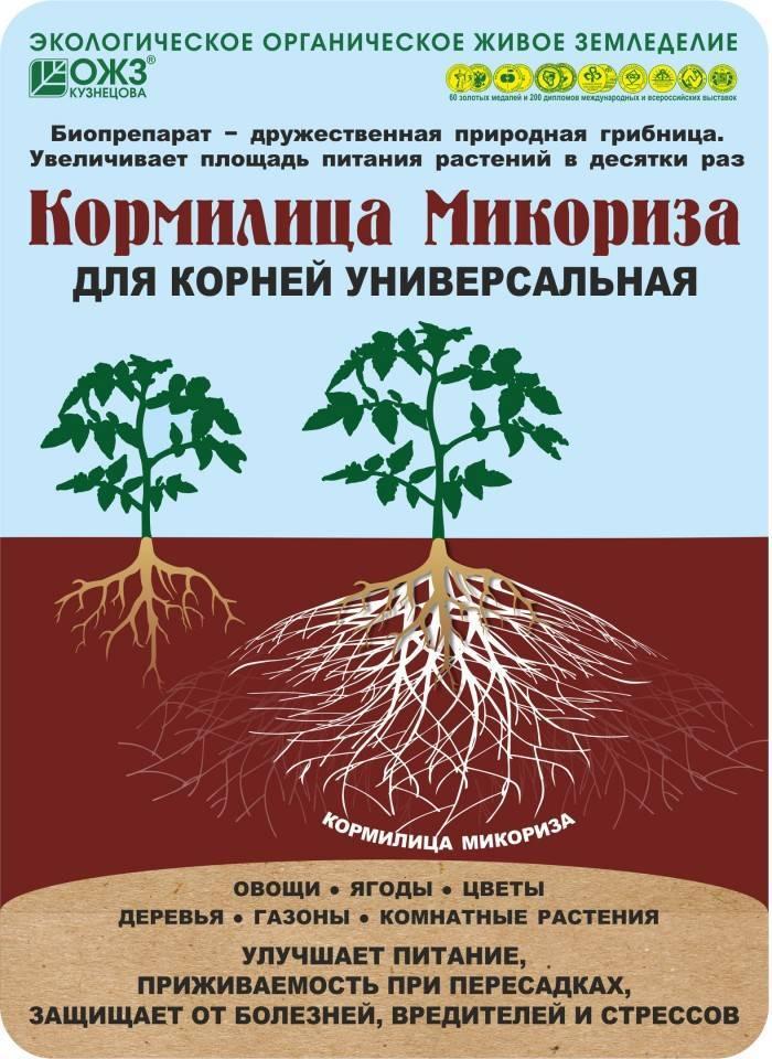 Микробиология почвы - soil microbiology - qaz.wiki