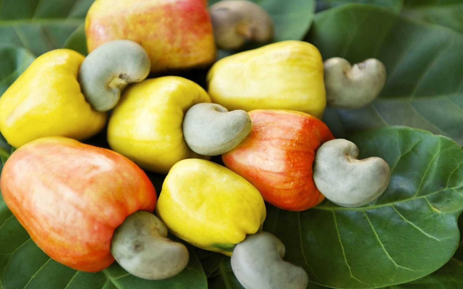 А вы знаете как растет кешью? советы по выращиванию и уходу смешных орешков дома