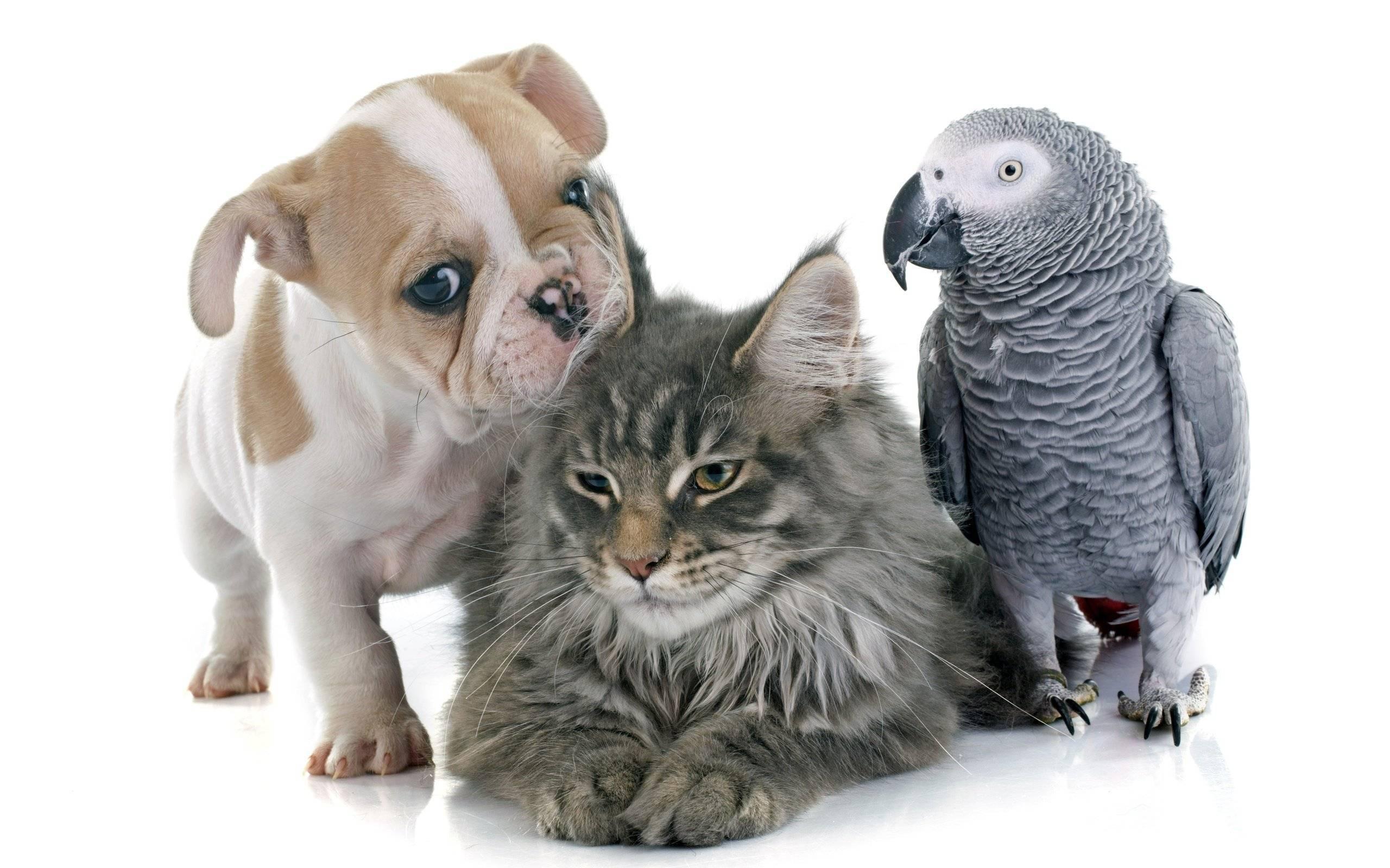 Можно ли собаке кошачий корм