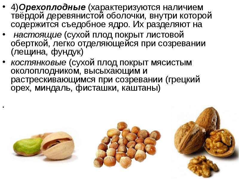 Чем полезно масло лесного ореха (фундук) и его применение в различных сферах